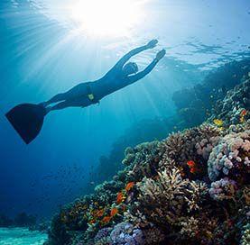 Snorkeling à Los Arcos de Cabo San Lucas