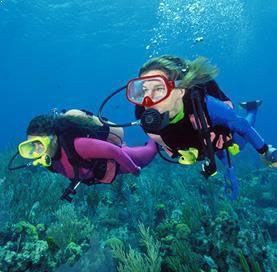 Plongée à Gordo Banks à Los Cabos
