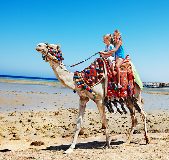 Enjoy Camel Safari in Los Cabos