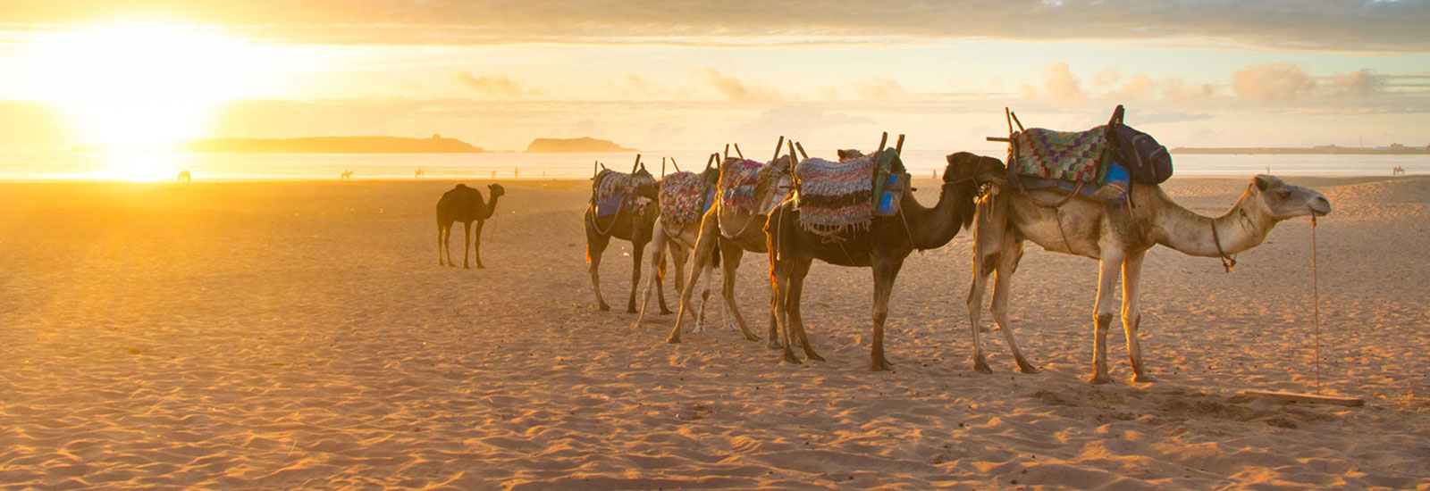 Camel Safari Los Cabos: Adventure, Tequila & Local Cuisine